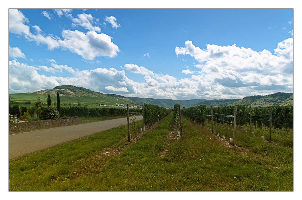 der Radweg führt an zahlreichen Weinreben vorbei