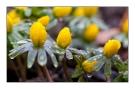 der Frühling kommt näher :)