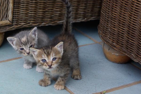 Urlaub 2008 - unsere kleinen Mitbewohner :-)