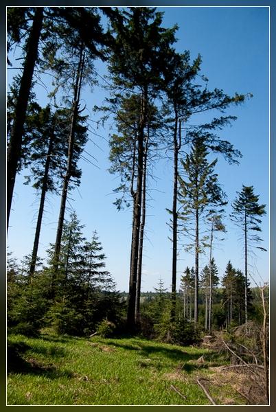 Thüringer Wald im Frühling