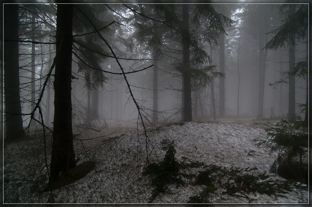 Winterschäden